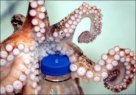 smart octopus